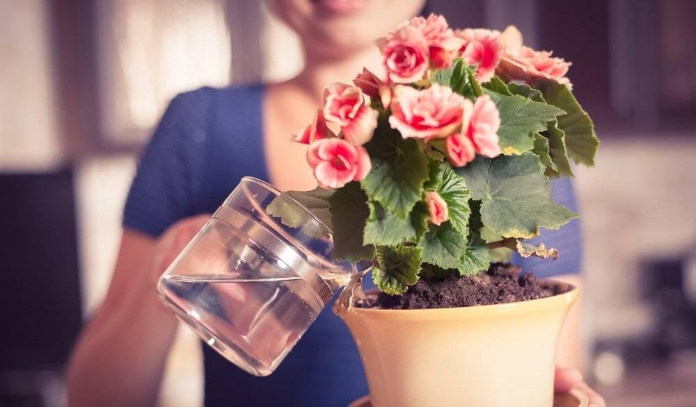 заварка чая для цветов комнатных