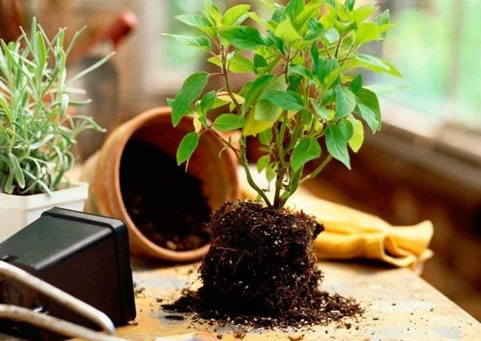 Земля для комнатных растений — основные компоненты