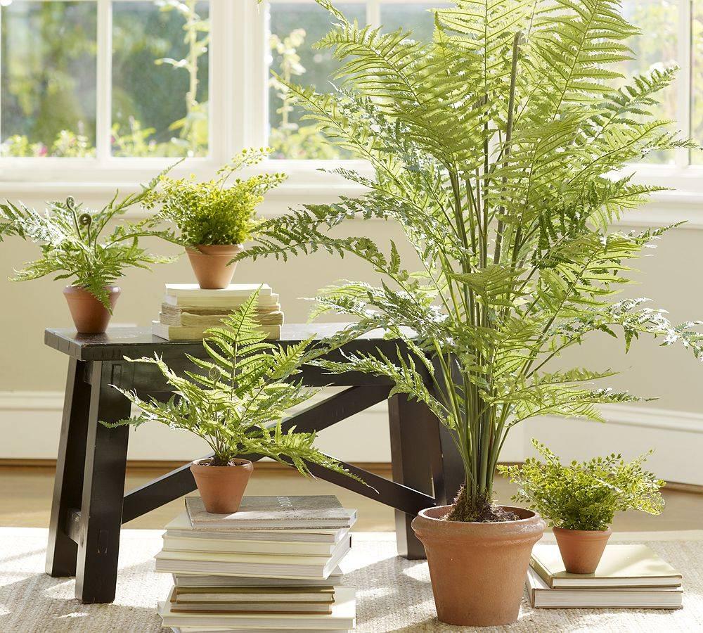 Комнатные растения тенелюбивые и неприхотливые