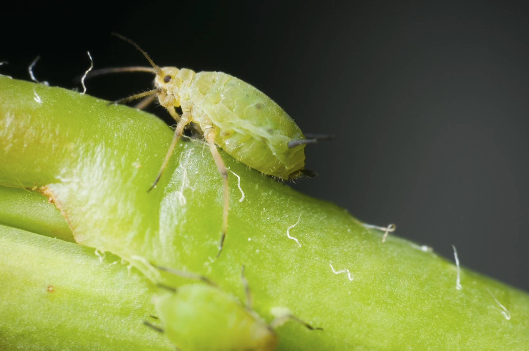 Мелкие насекомые в горшках комнатных растений
