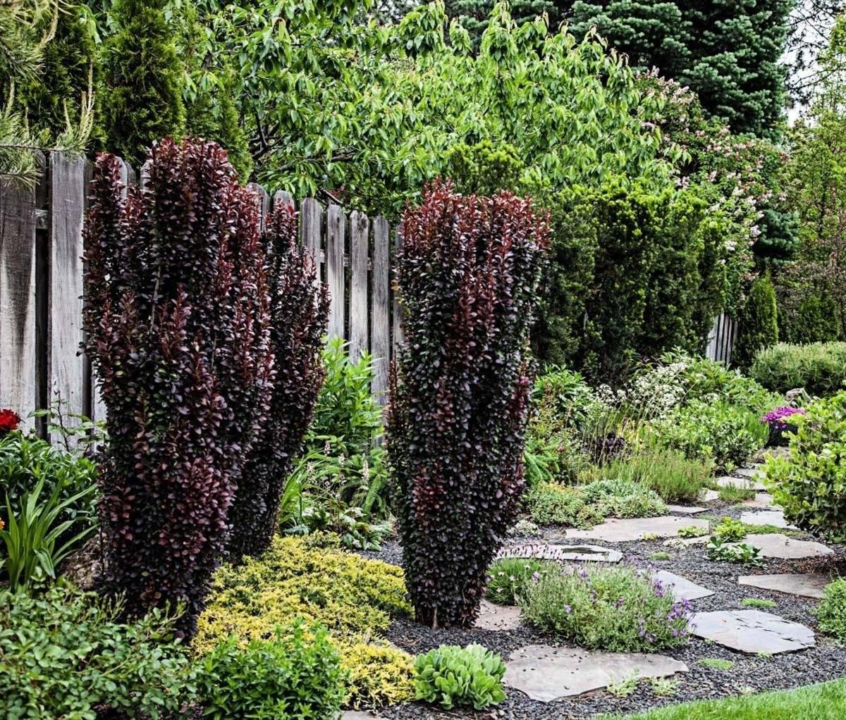 Растения для живого бордюра