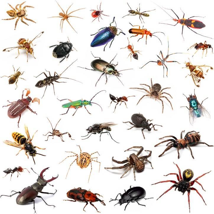 картинки много насекомых на одном листе компонент
