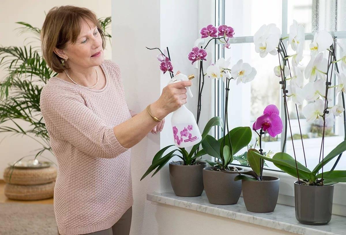 Удобрения для орхидей (49 фото): чем подкормить орхидею в домашних условиях, чтобы она цвела и давала деток? Как правильно подкармливать?