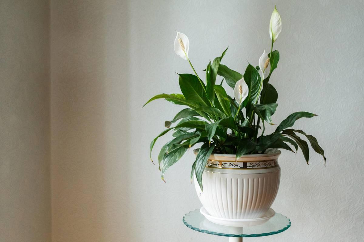 Какие растения нужно держать дома для благополучия