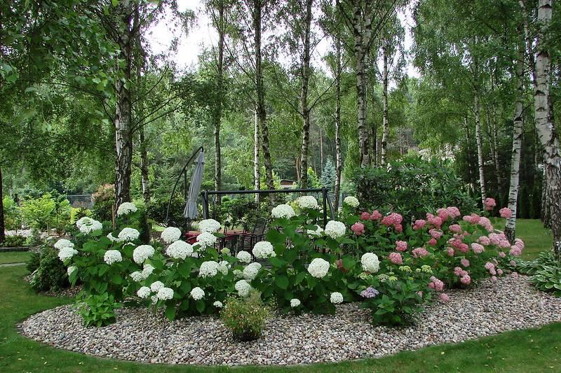 Композиция с гортензией в саду