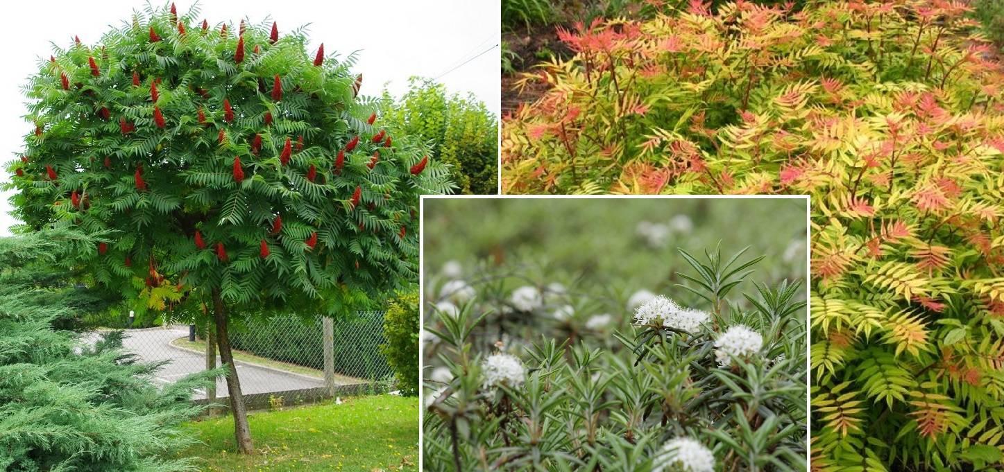 Многолетники цветущие белыми цветами, с названиями и фото растений