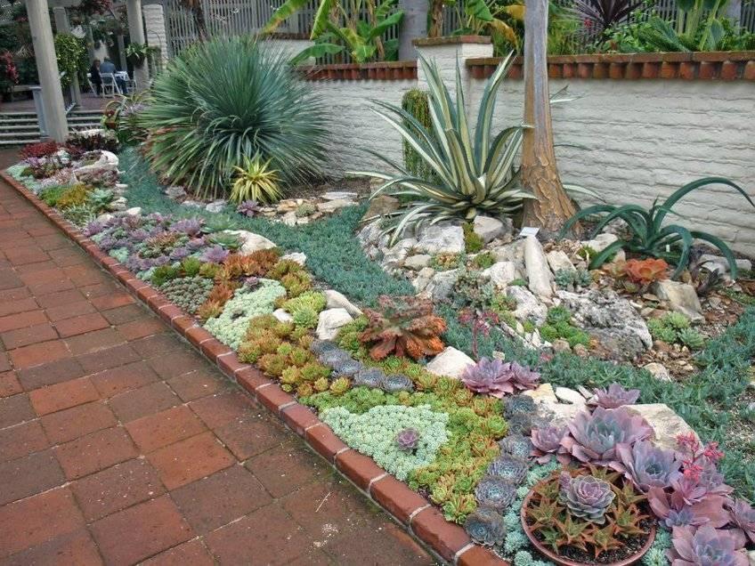 Кактусы зимующие в открытом грунте