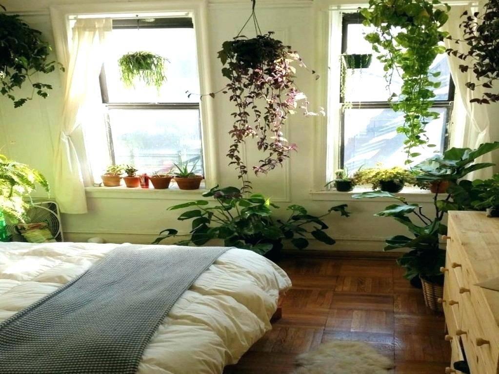 Какие комнатные растения нельзя держать в спальне
