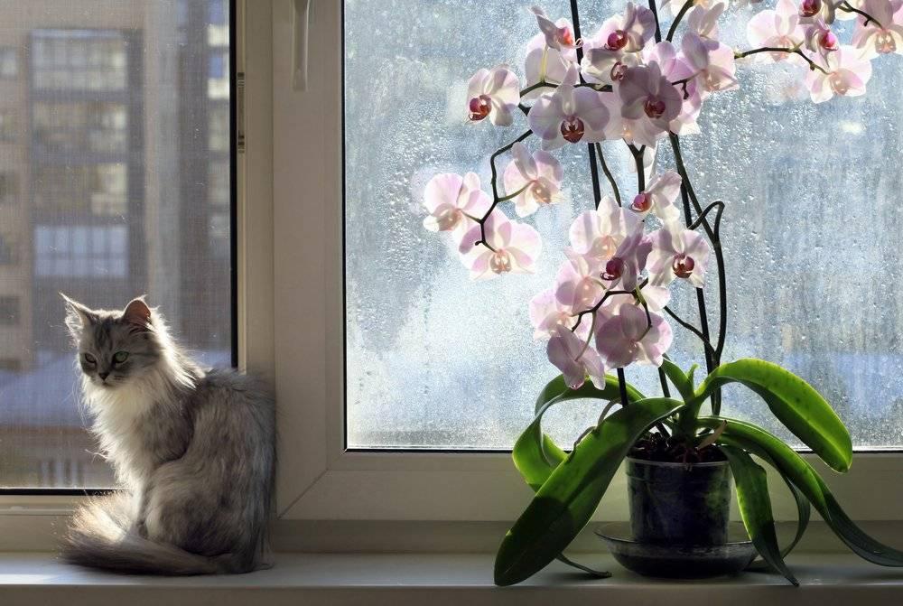 Цветы для дома, комнатные растения, приносящие счастье, благополучие и удачу