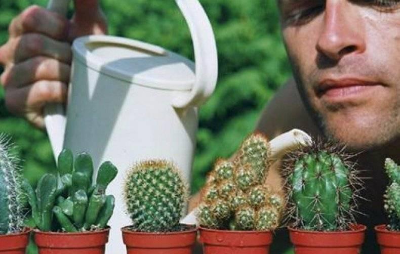 Когда нужно поливать кактусы