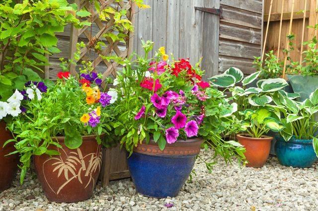 Комнатные растения на улице летом