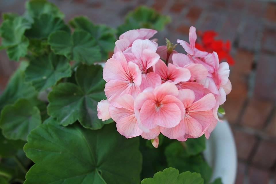 Комнатные цветы любящие солнце и жару