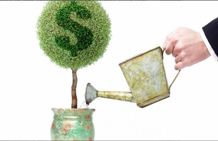 В каком грунте выращивать денежное дерево в домашних условиях