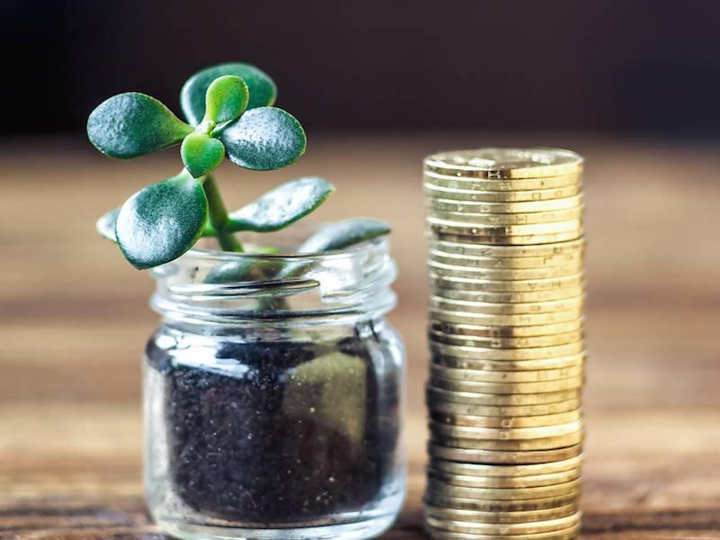 Размножение денежного дерева - ВСЁ ДЛЯ ДОМА