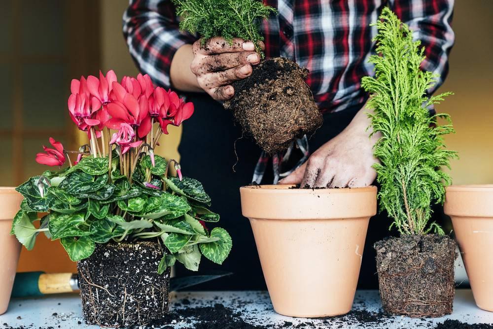 Лунный календарь для комнатных растений