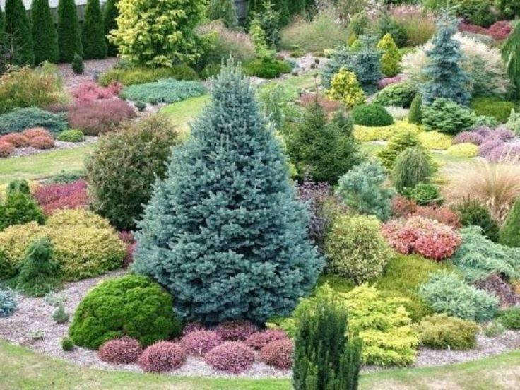 Хвойные низкорослые кустарники для сада