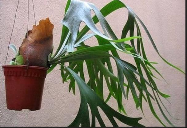 Папоротник это какое растение