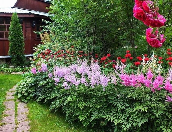 Астильба: описание цветов, болезни и борьба с ними, когда цветет,