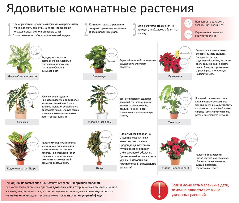 Какие цветы нельзя держать в квартире
