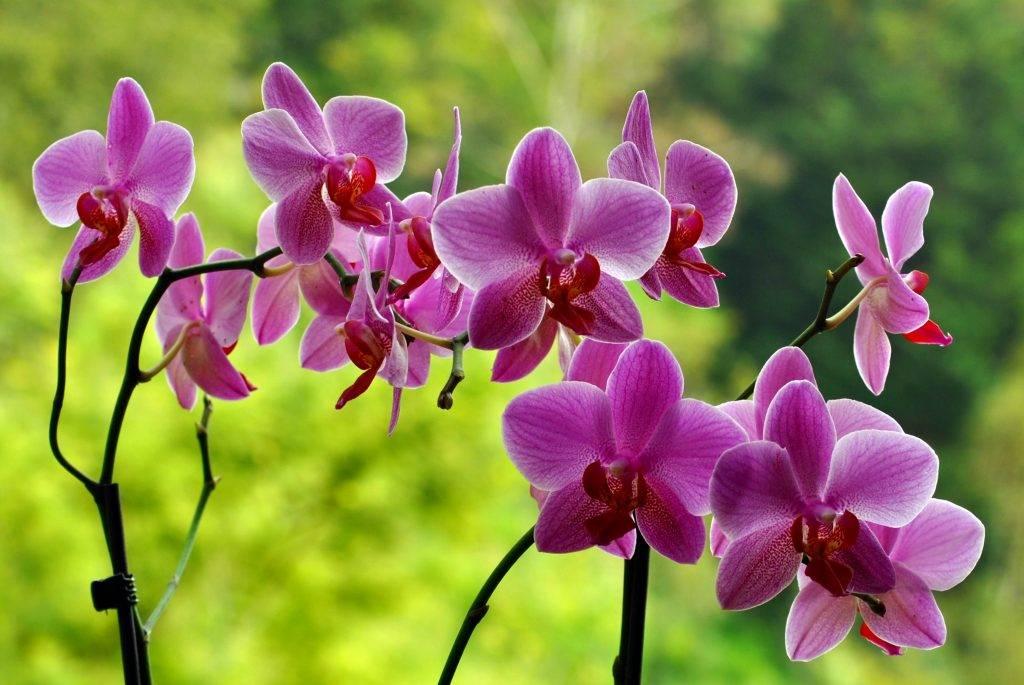 Можно ли обрезать орхидею и нужно ли удалять её корни, листья и цветонос?