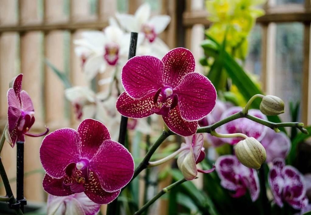 фотками орхидея и уход за ней в картинках поверьях, суевериях