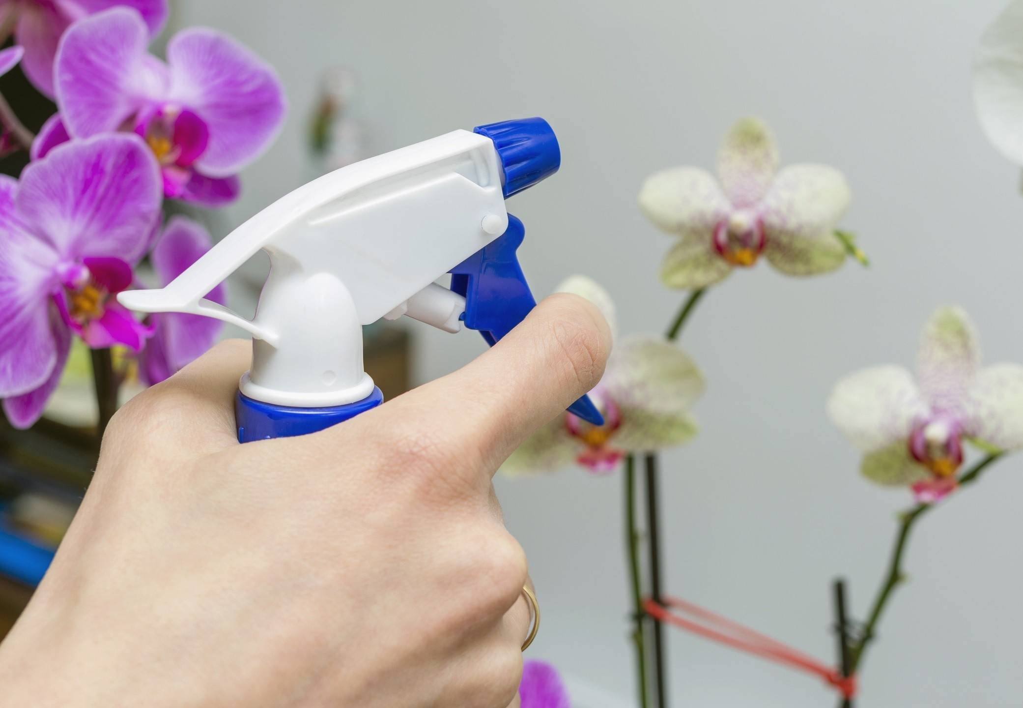 Полив орхидей в домашних условиях: как часто поливать во время цветения, опрыскивание фаленопсиса
