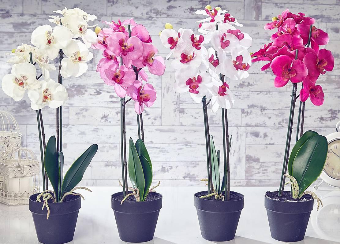 Пересадка орхидеи в домашних условиях: пошаговое описание с фото