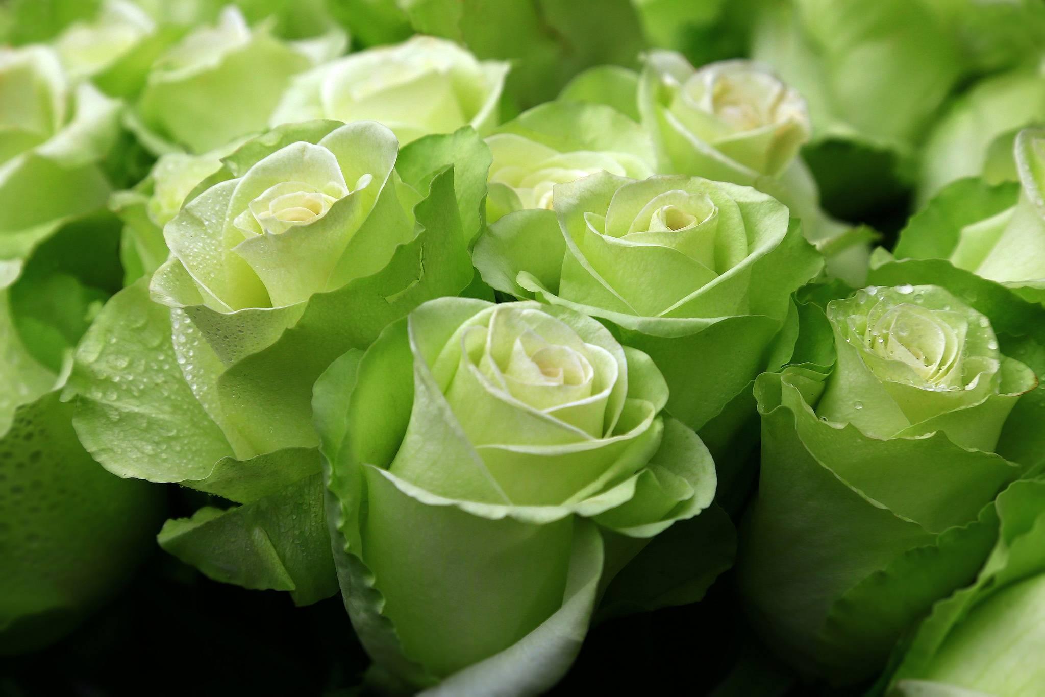 Цветочки зеленые картинки