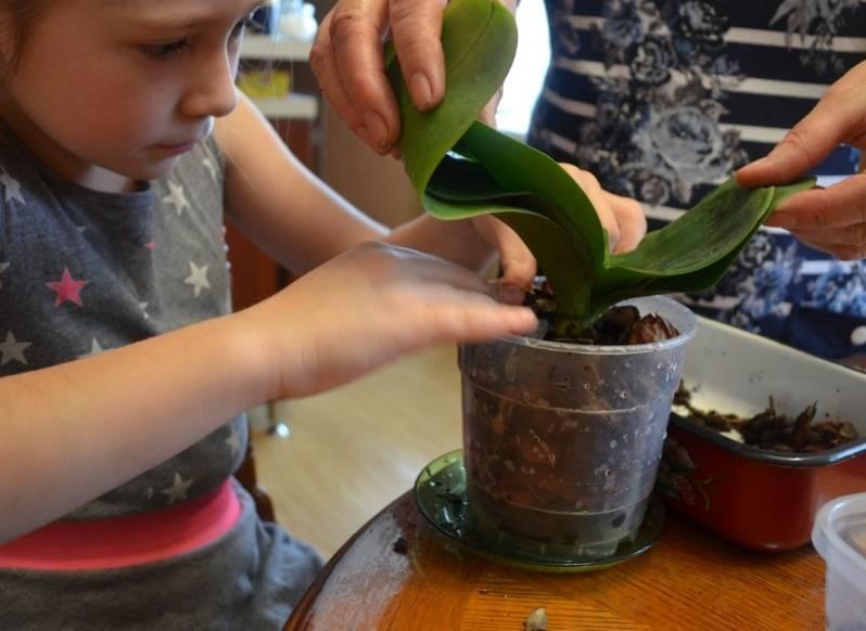 Как подготовить кору для орхидей