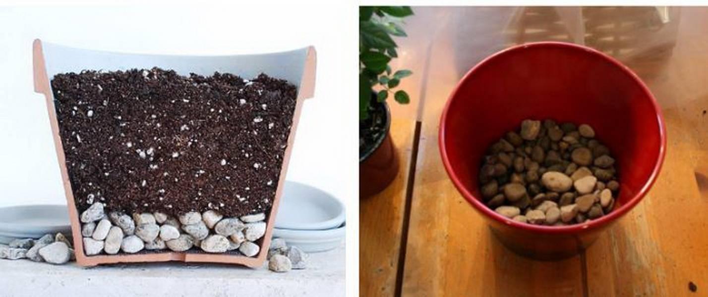 Цикламен из семян в домашних условиях