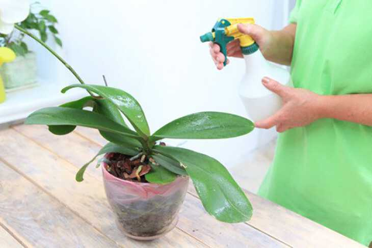 Почему морщатся листья у орхидеи