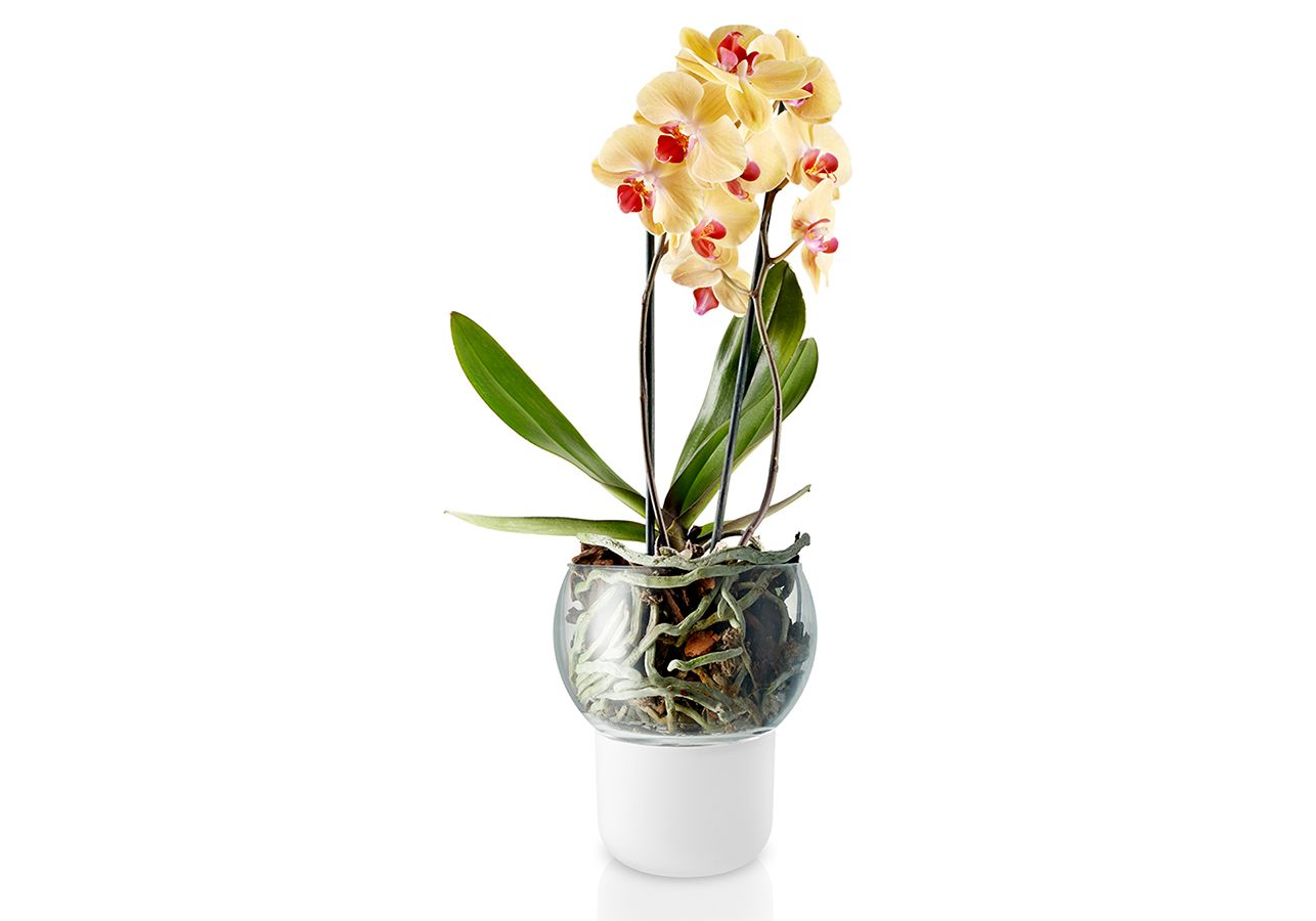 Как пересадить орхидею на новое место