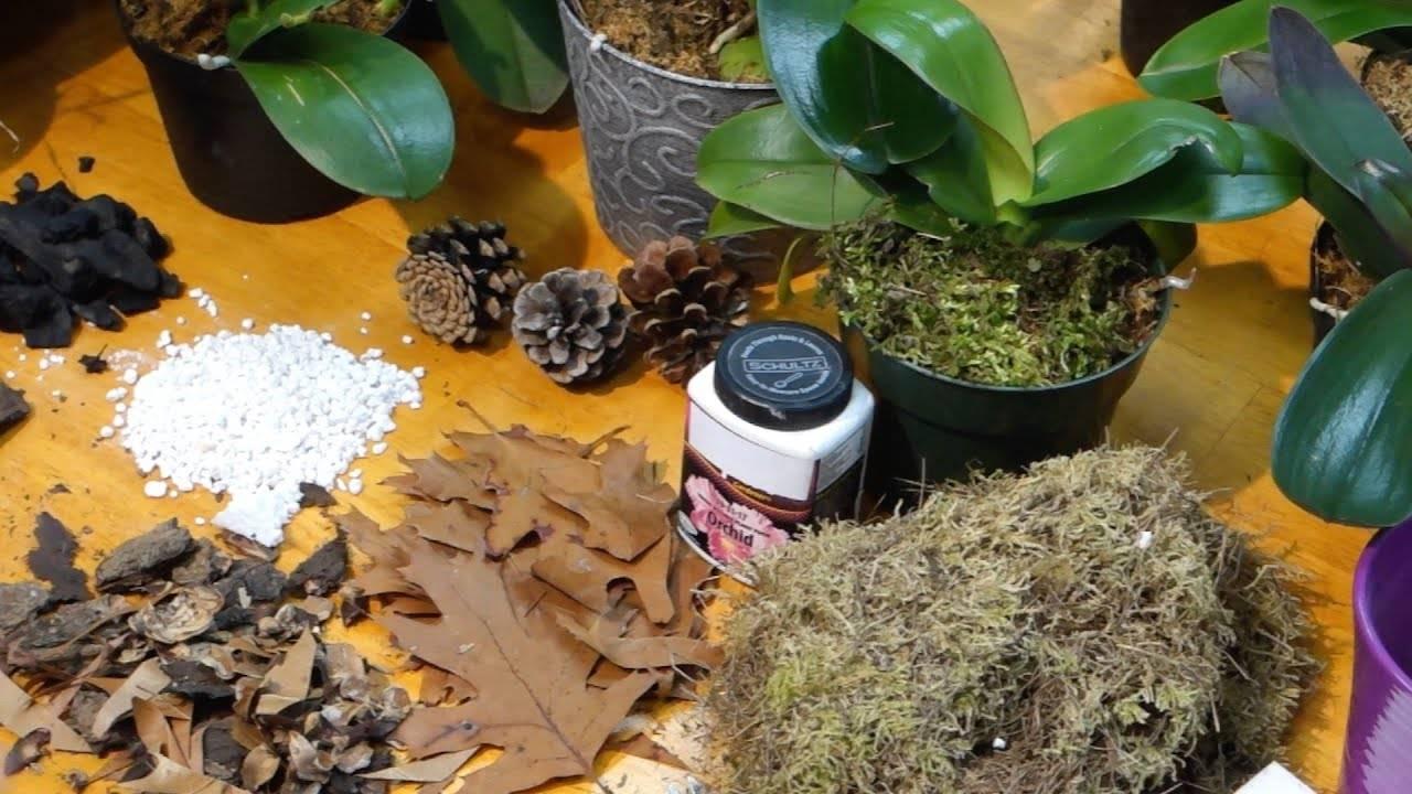 Можно ли орхидеи выращивать в кокосовом субстрате?