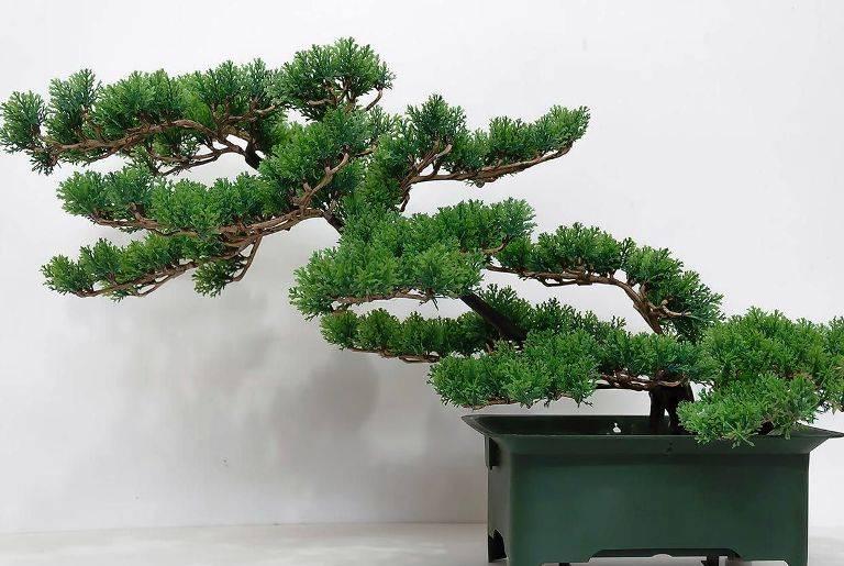 Бонсай — искусство миниатюрных деревьев