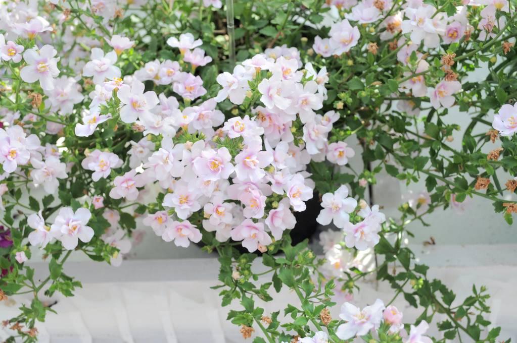Какие и как лучше посадить цветы в уличные кашпо - Огород, сад, балкон
