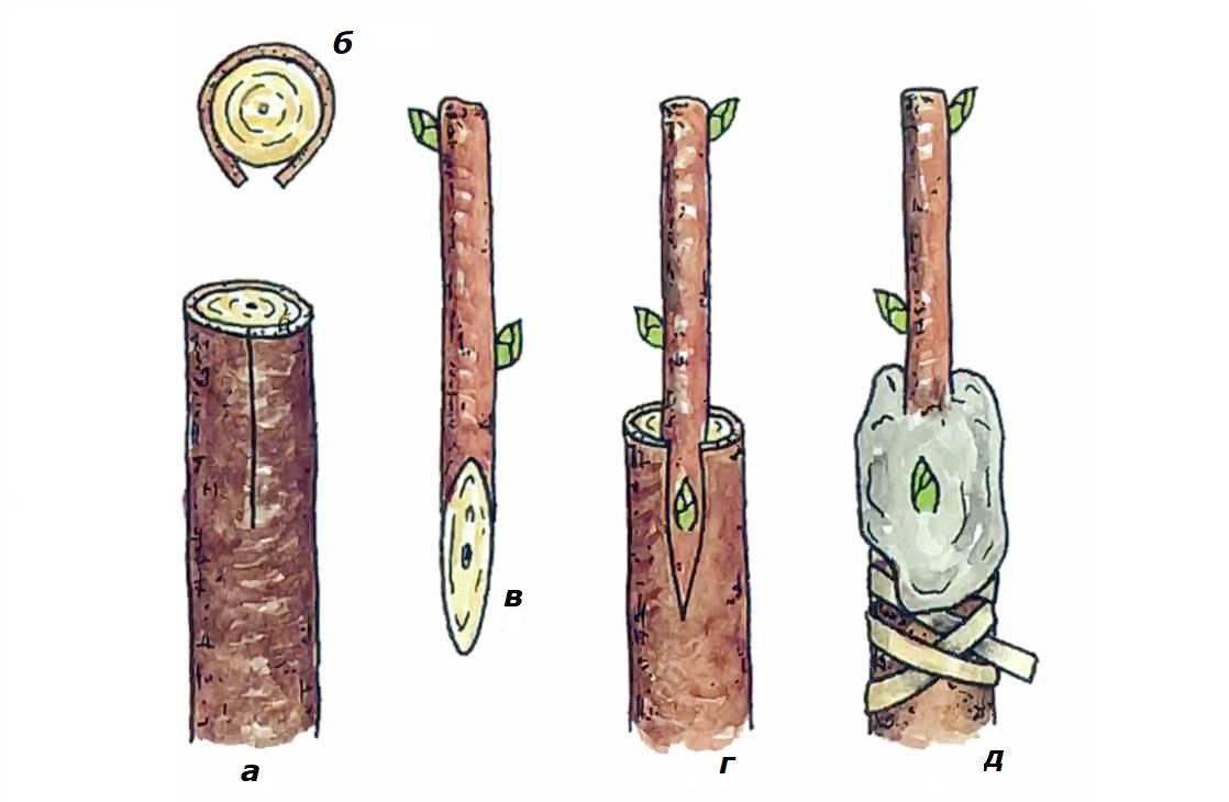 Гортензия на штамбе (28 фото): примеры в ландшафтном дизайне. Как сформировать штамбовую гортензию своими руками?