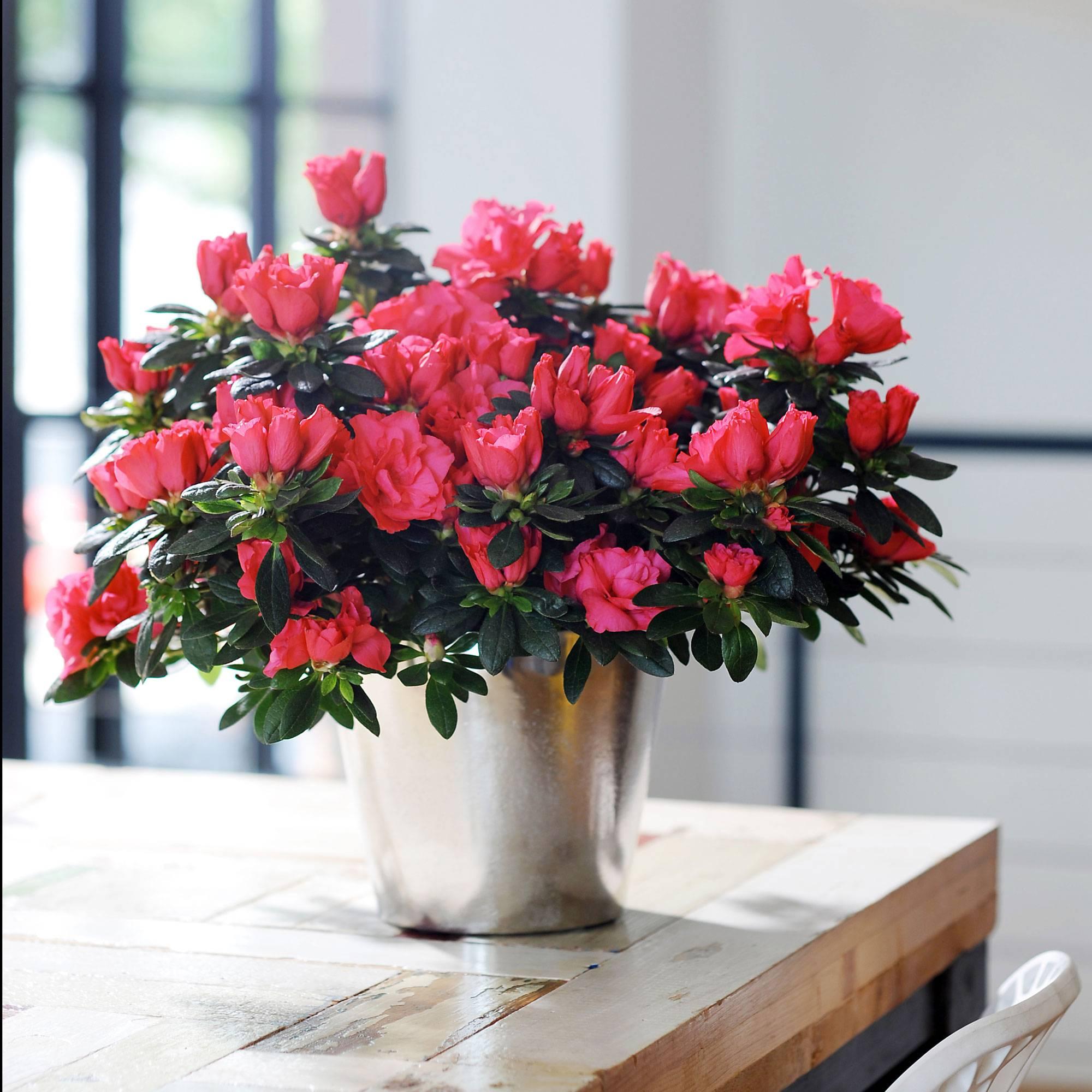 Комнатные цветы которые много цветут