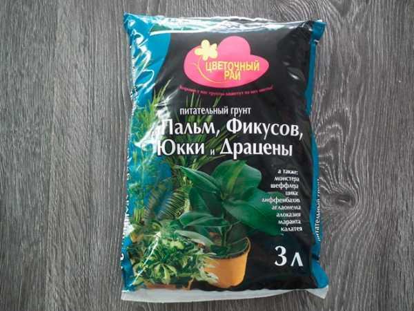 Удобрение для пальмы в домашних условиях, чем и как подкармливать{q}