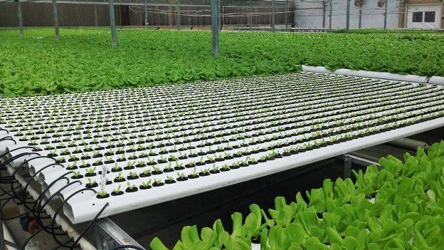 Правила посадки укропа в открытый грунт семенами весной: как посеять и вырастить