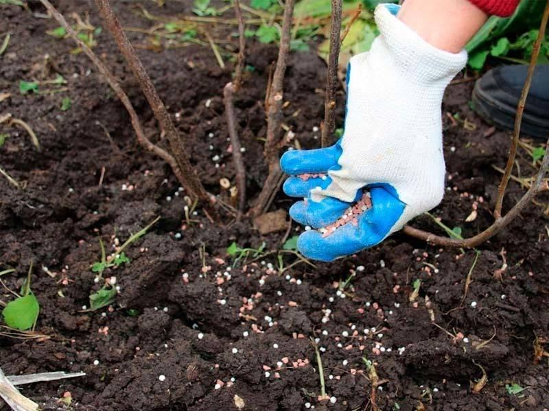 Как, чем и когда удобрять деревья{q} ⋆ «ПРЕМЬЕР АГРО» — агропромышленный журнал