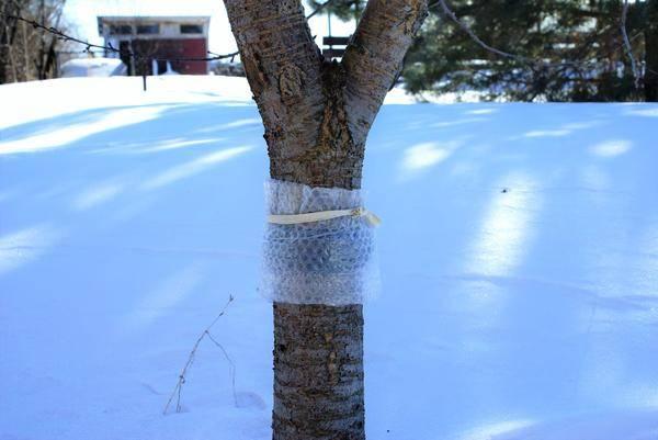 Препарат от тли на деревьях