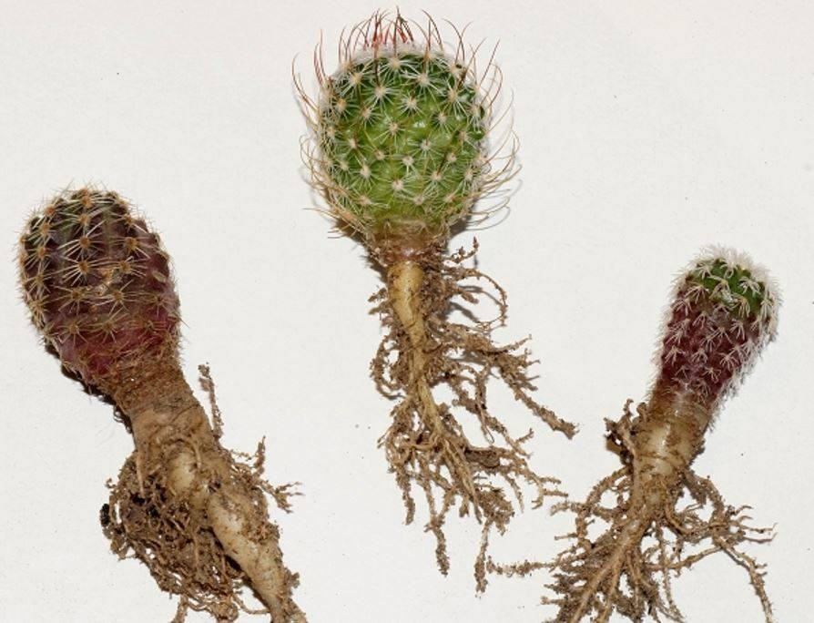 Какой горшок выбрать для кактуса