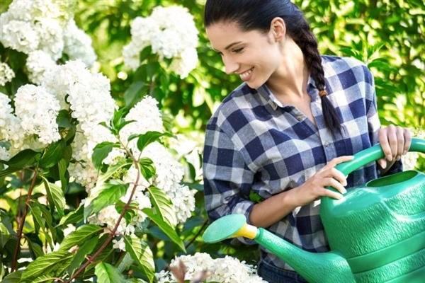 Как сделать почву кислой для гортензий, вересков, хвойных?