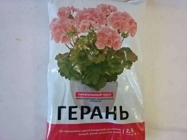 Выращивание пеларгонии (герани) из семян: когда и как сеять на рассаду, дальнейший уход и высадка в грунт