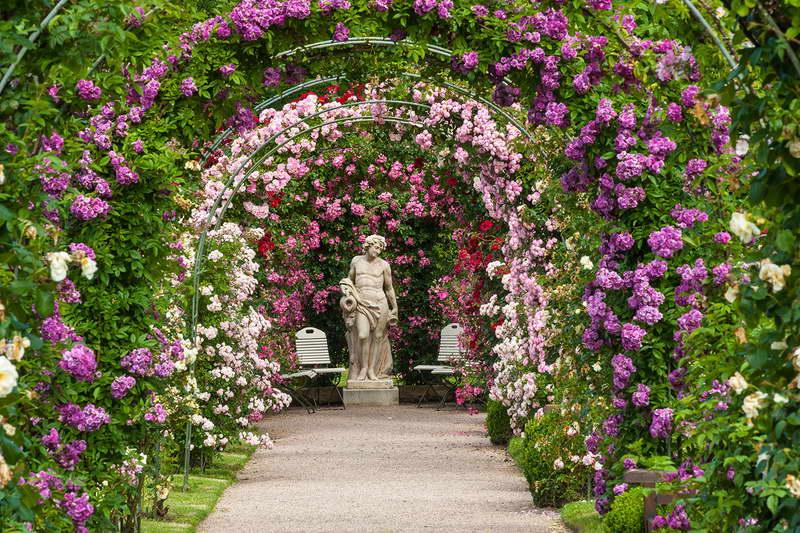плетистые розы в ландшафте фото бликов невольно вызывает